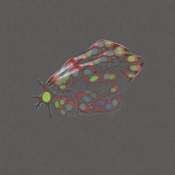 Cellepidoptera by Jon Draper